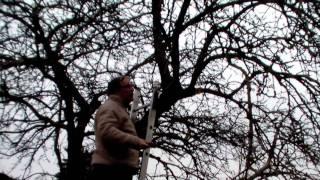 #301 Schneiden im Garten 2011 - Apfelhochstamm 4v6