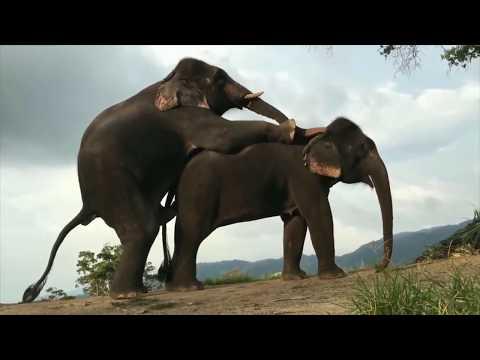 Zebra Mating - Elephant Mating - Horse Mating - Animals Breeding Compilation ll Animals Mating