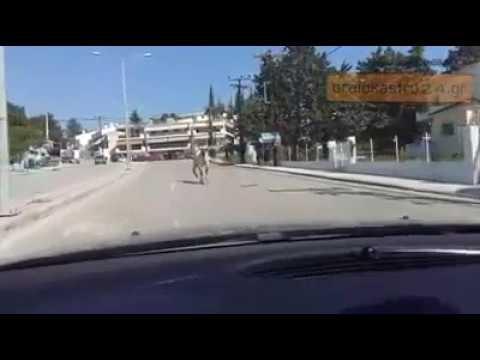 Άλογο έκανε βόλτες στη Θεσσαλονίκη