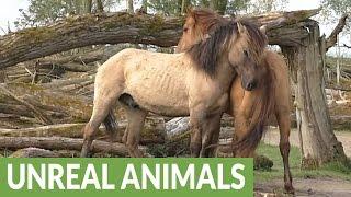animale bataie cai salbatici