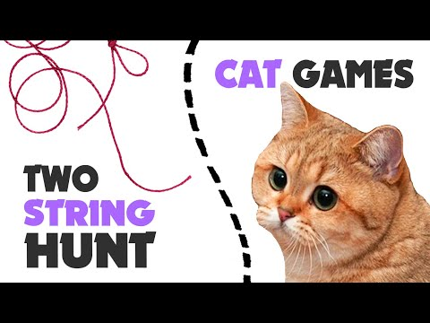 Hunt TWO STRING STRING thing for cats ★ CAT GAMES 1 hour