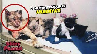 Video Induk Kucing Ini Bolak-Balik 5x Dari Kebakaran Demi Menyelamatkan Anaknya MP3, 3GP, MP4, WEBM, AVI, FLV Mei 2019