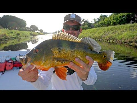 Fishing for Clown Knife Fish and Peacock Bass - VLOG #9_Horg�szat vide�k