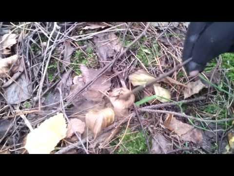 奇怪的蘑菇會出冒煙?!一直搓一直冒…