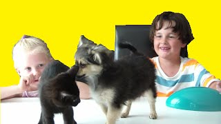 Video mes ANIMAUX surprises CHIEN OU CHAT ?FUNNY VIDEO DOG & CAT MP3, 3GP, MP4, WEBM, AVI, FLV Oktober 2017