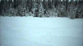 5. Arctic Cat 2011 EFI