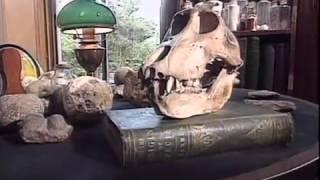 ZÁHADNÝ PŮVOD ČLOVĚKA - Zpochybnění Darwinovy Evoluční Teorie