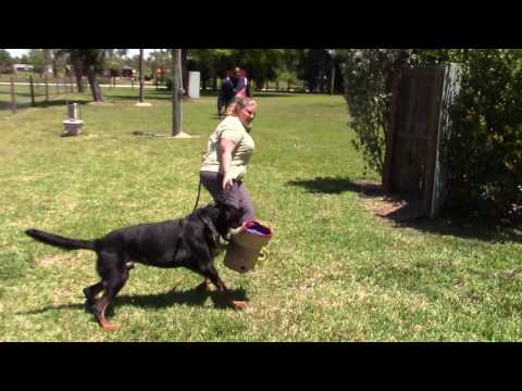 ARC Beaucerons - Luke working in protection