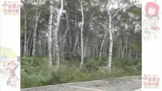 『白い森…八千穂高原 恋人の聖地』