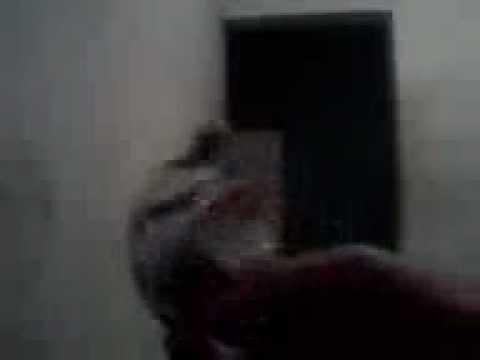 Esencias de narguile videos videos relacionados con - Hacer cachimba casera ...