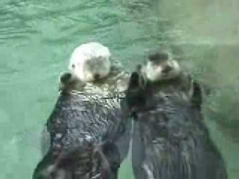 Ilyen cuki, amikor a hódok alszanak a vizen - kézenfogva