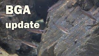Did it work?? Cyanobacteria battle by Rachel O'Leary