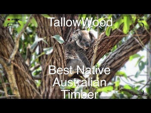 The Tallowwood Tree - Eucalyptus microcorys - Best Native Timber in NSW
