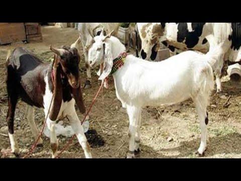 my motherland pakistan vlog 2