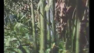 Nonton Krai Thong 2   1985 Film Subtitle Indonesia Streaming Movie Download