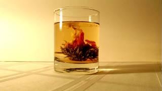 Tea Flower Time Lapse