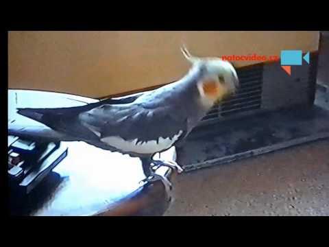 Pepíček tančí
