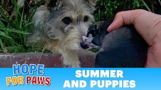 Download Youtube: Watch how this stray mom reacted when Hope For Paws reached out for her puppies.