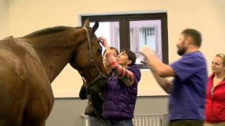 Визит ветеринарного врача Андрэ Бёмера (Германия) в клинику MAXIMA VET