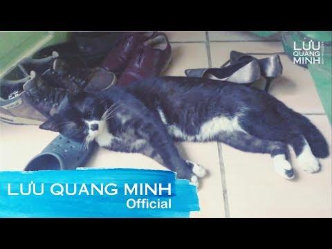 Funny cat videos - MY FUNNY CAT #11  LƯU QUANG MINH VLOG