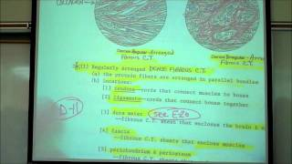 HISTOLOGY; CONNECTIVE TISSUES; Part 1 By Professor Fink