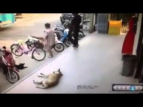 這就是欺負狗的下場!