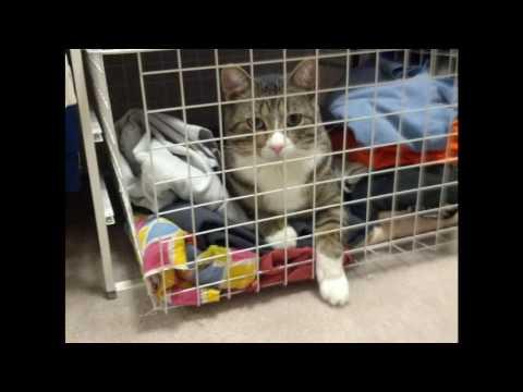 Google Photos pet videos (you need sound on)