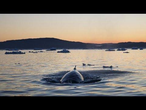 Νεκρές φάλαινες στη Νορβηγία
