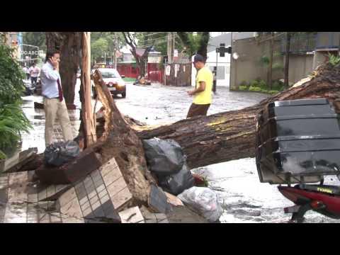 Chuva forte derruba árvores na região; veja vídeo - Diário do Grande ABC