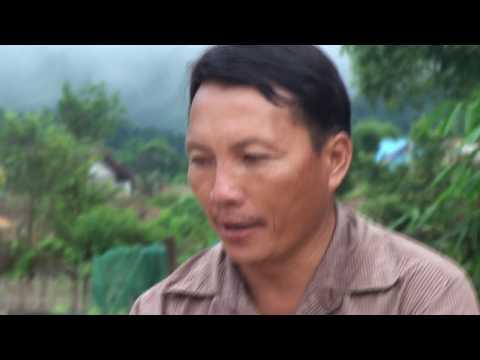 Qhia txog tshuaj zoo mob ntsws (видео)