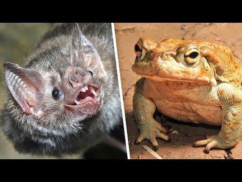 , title : '5 отвратительных блюд из ЖИВЫХ животных | Их едят ЖИВЬЕМ'