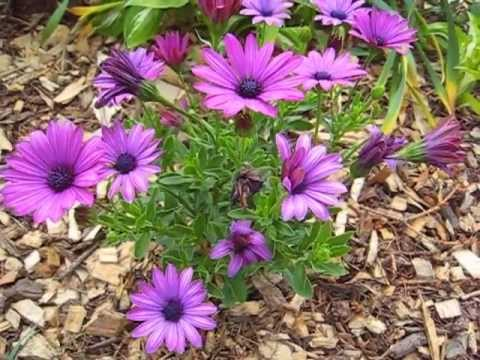 Our Flower Garden – Wisconsin Garden Video Blog 137
