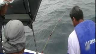 Bahia Mar Lanchas tiene a su disposicion el Servicio de Alquiler para la Pesca Deportiva, nuestro paquete de incluye ademas de...