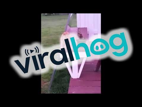 il gatto si siede come un umano !!