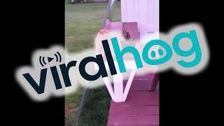 Cat Sits Like A Human || ViralHog