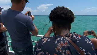 Protecting Dolphins: How to Best View Them - NOAA Fisheries