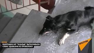 Шокирующие кадры: из однушки бишкекчанки вытащили и убили 8 собак