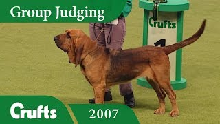 Nonton Bloodhound Wins Hound Group Judging At Crufts 2007 Film Subtitle Indonesia Streaming Movie Download