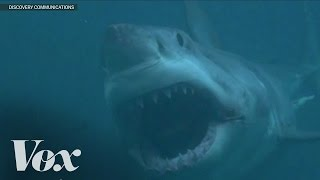 Shark Week used to be educational. Now it's filled with fake documentaries about