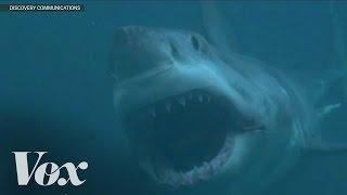 Video Does Megalodon still exist? Shark Week debunked MP3, 3GP, MP4, WEBM, AVI, FLV Juni 2018