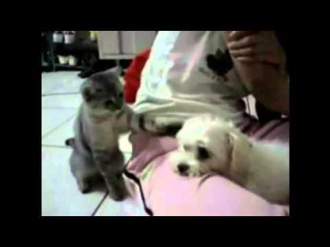 Kutyák vs Macskák 1