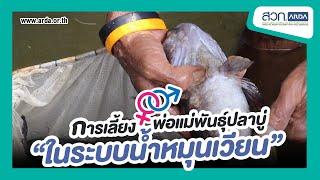 การเลี้ยงพ่อแม่พันธุ์ปลาบู่ในระบบน้ำหมุนเวียน