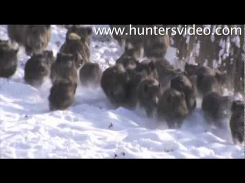 Wild Boar Fever 2 - Hunters Video