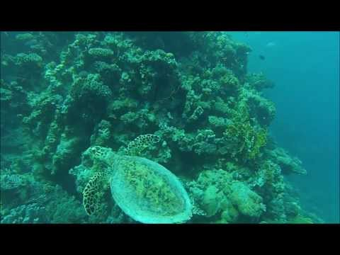 Red Sea Diving Safari - Marsa Shagra Eco-Lodge