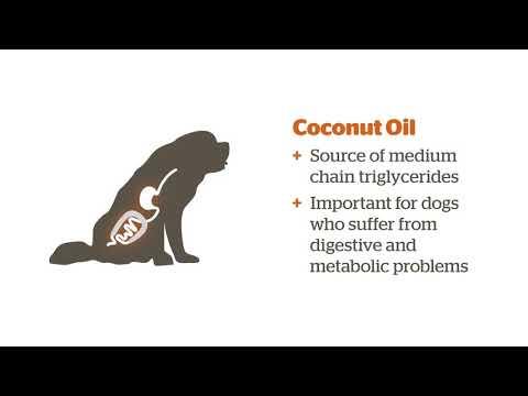 Fats in Pet Foods