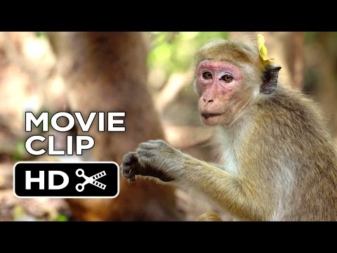 Monkey Kingdom Clip 'We're the Monkeys'