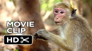 Nonton Monkey Kingdom Movie Clip   We Re The Monkeys  2015    Disneynature Documentary Hd Film Subtitle Indonesia Streaming Movie Download