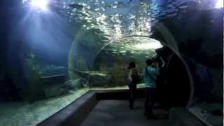Siam Ocean World (Bangkok Aquarium)