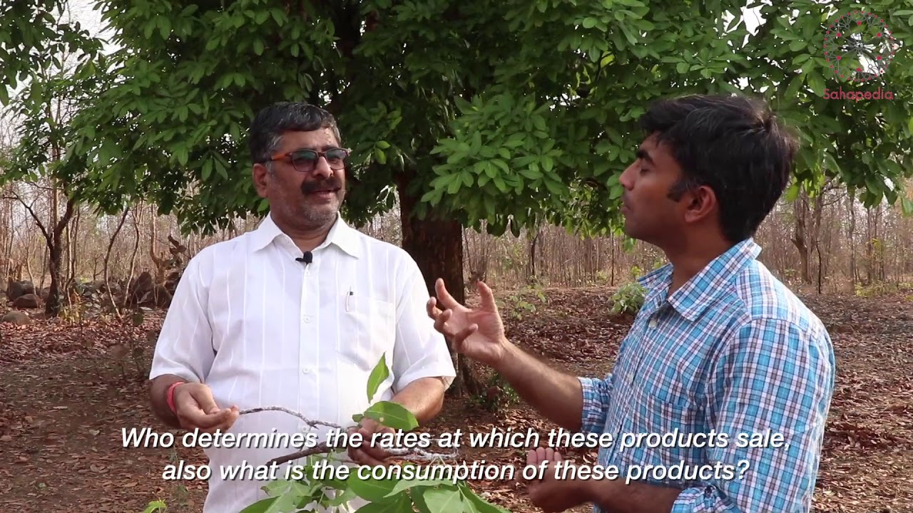 The Landscape of Lac Production in Bastar: a conversation between Arunpol Seal and Basant Yadav, President, Sahabhagi Samaj Sevi Sanstha