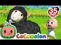Download Lagu Baa Baa Black Sheep | +More Nursery Rhymes & Kids Songs - CoCoMelon Mp3 Free